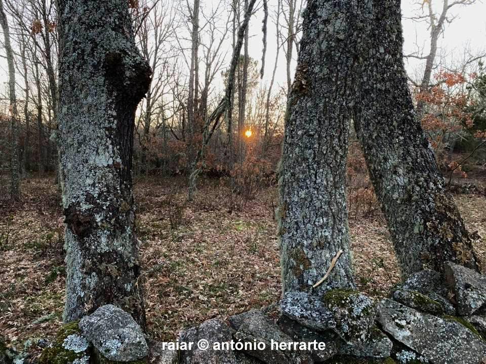 Arvores_A-Herrarte