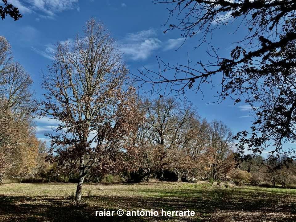 Arvores_A-Herrarte10
