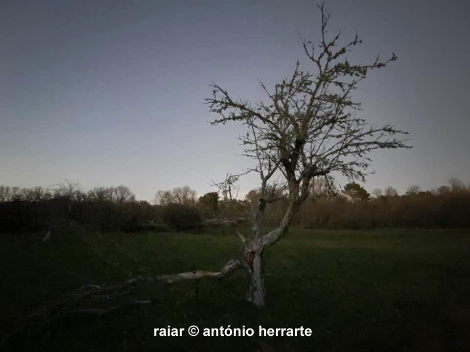 Arvores_A-Herrarte3