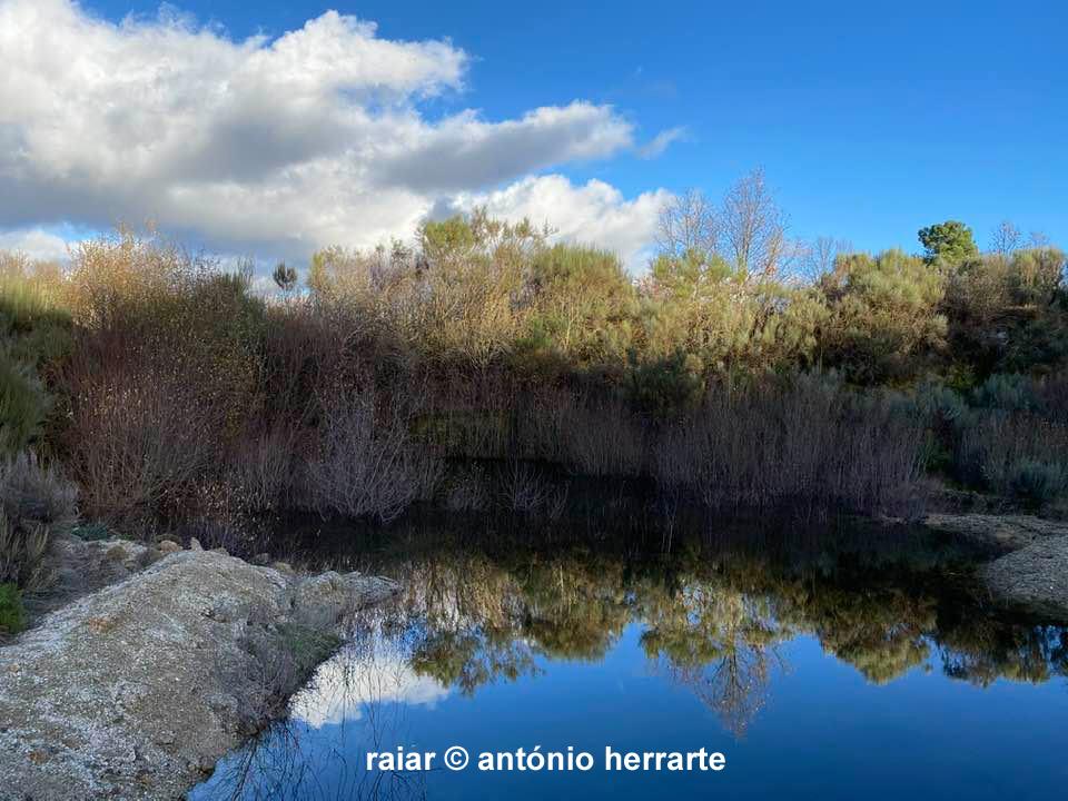 Arvores_A-Herrarte6