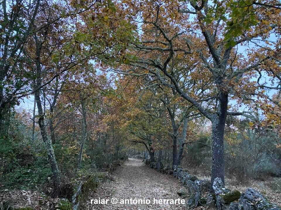 Caminhos_A-Herrarte4